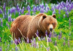 BEAR ON THE MEADOW CASTORLAND 500 ΚΟΜΜΑΤΙΑ