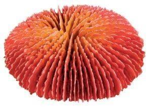 ΔΙΑΚΟΣΜΗΤΙΚΟ ΕΝΥΔΡΕΙΟΥ TRIXIE ΚΟΡΑΛΙ 10-13CM pet shop ψαρι διακοσμητικα ενυδρειου κοραλλια