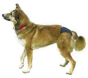 TRIXIE ΣΕΡΒΙΕΤΑ ΣΚΥΛΩΝ 0 (20-25 ΕΚ.) pet shop σκυλοσ υγιεινη περιποιηση σερβιετεσ