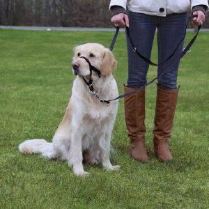 ΕΚΠΑΙΔΕΥΤΙΚΟΣ ΟΔΗΓΟΣ ΜΑΥΡΟΣ L 50-57CM pet shop σκυλοσ εκπαιδευση οδηγοι