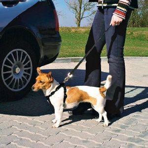 ΖΩΝΗ ΑΣΦΑΛΕΙΑΣ TRIXIE ΣΚΥΛΟΥ S pet shop σκυλοσ ασφαλεια ζωνη ασφαλειασ