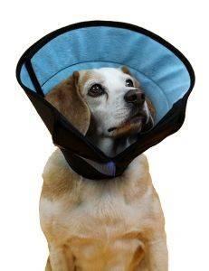 ΠΡΟΣΤΑΤΕΥΤΙΚΟ ΚΟΛΑΡΟ KVP ΕΛΙΣΑΒΕΤΙΑΝΟ CALMER L pet shop σκυλοσ ασφαλεια πρωτεσ βοηθειεσ